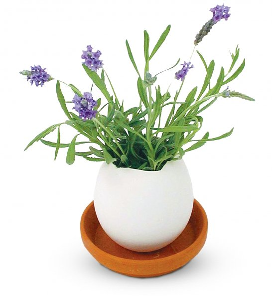 Lavender Eggling, Top 5 Business Easter Gifts