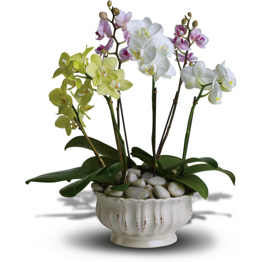 Regal Orchid Company Gift, Best Company Holiday Gifts Over $100, Best Luxury Company Holiday Gifts